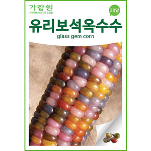 glass gem corn seed (20 seeds)