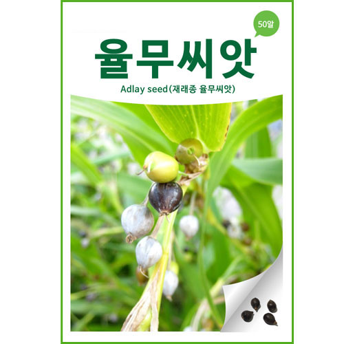 adlay seed (50 seeds)