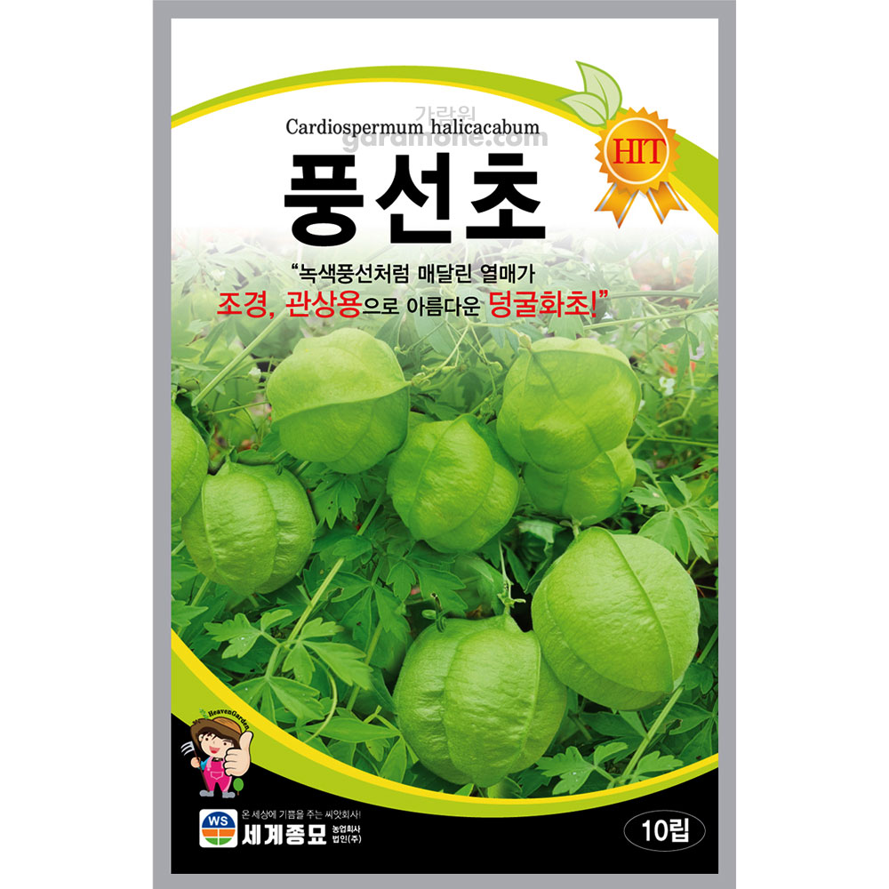 balloon vine seed (10 seeds)