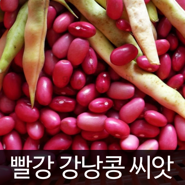 red kidney bean (60 seeds)