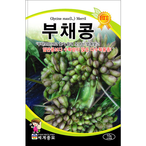 fan bean seed (30 seeds)