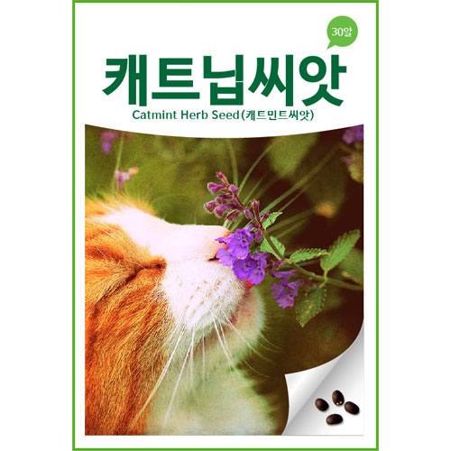 catmint herb seed (100 seeds)