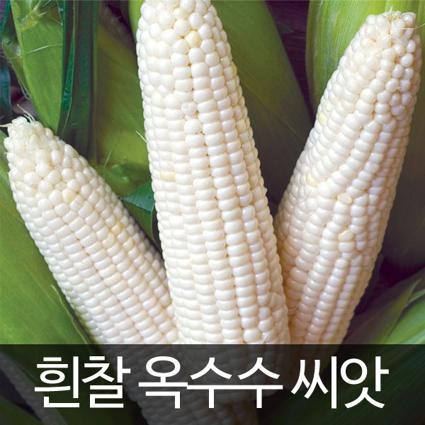 white corn seed (70 seeds)