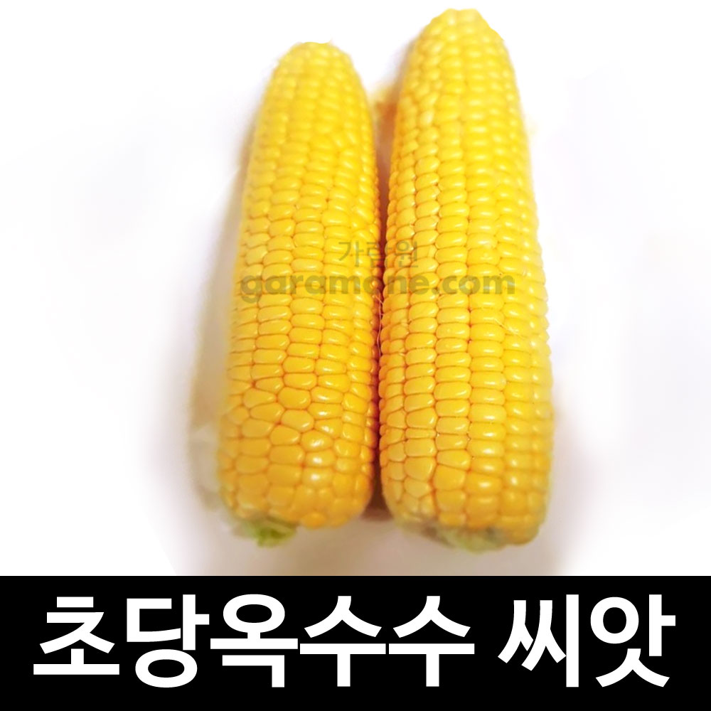 yellow sweet corn seed (20g)