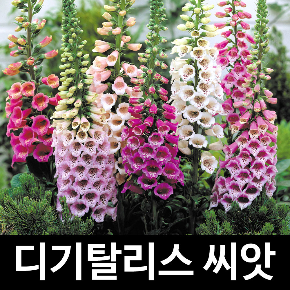 mix digitalis seed (100 seeds)