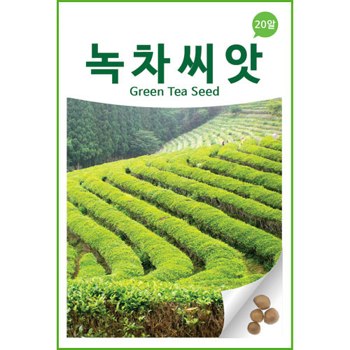 korean green tea seed (20 seeds)