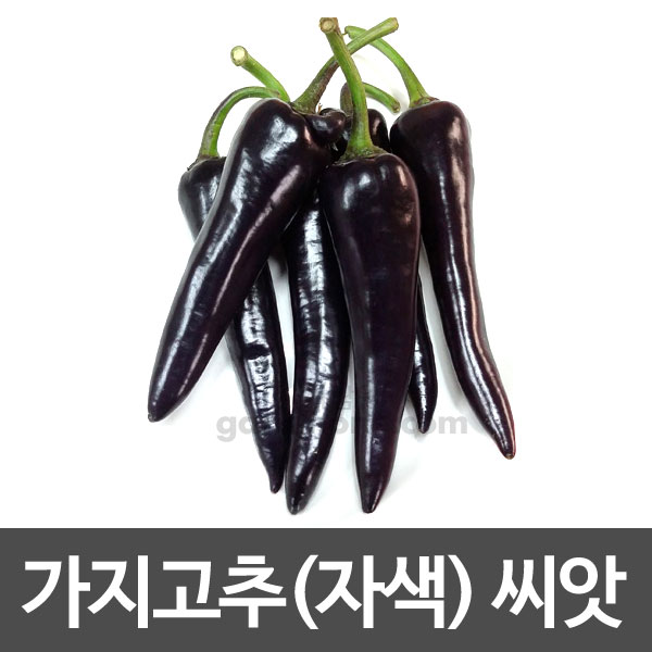 black sweet pepper seed (10 seeds)