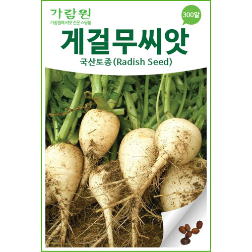 korean radish seed (300 seeds)